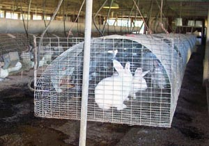 Rabbit_housing